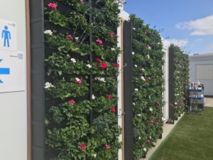 wellbeing garden flowers