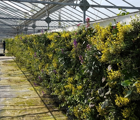 Living Wall Planting in the the Biotecture nursery in West Sussex