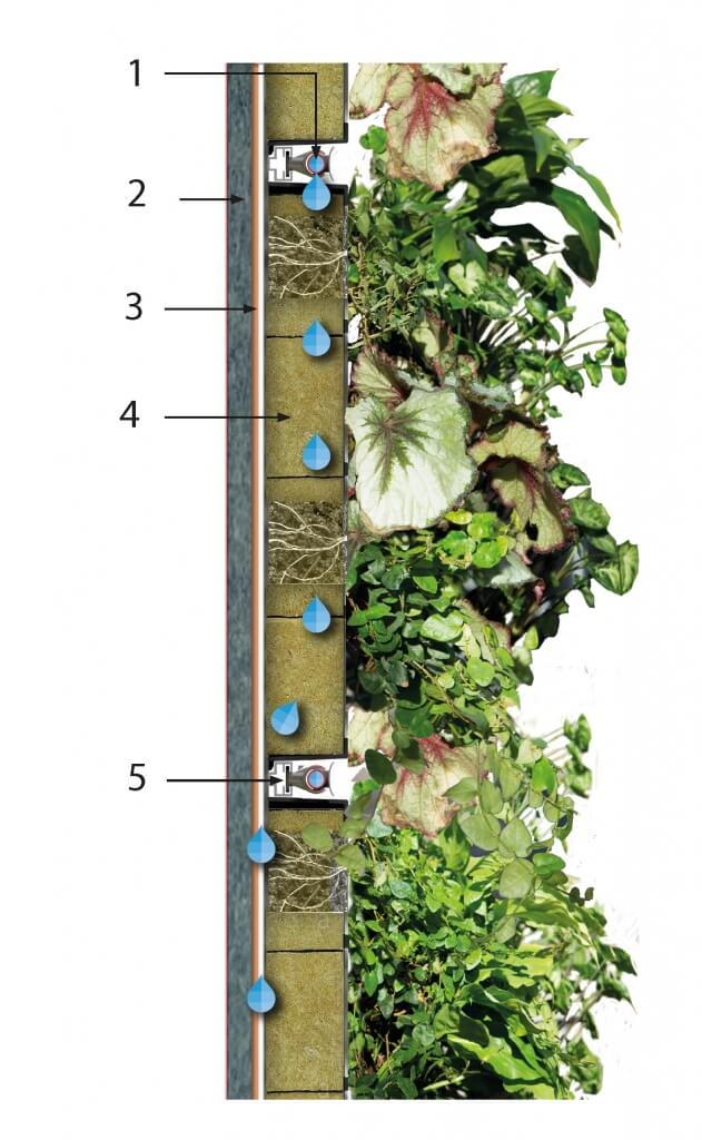 Biotecture Living Wall Specification in section view